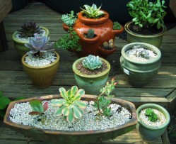 succulentcontainers