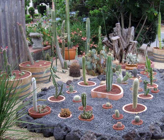Redwood City Cactus Garden