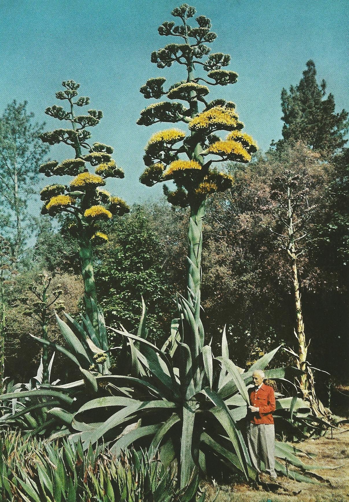 Vintage Agave Bloom Cactus Jungle