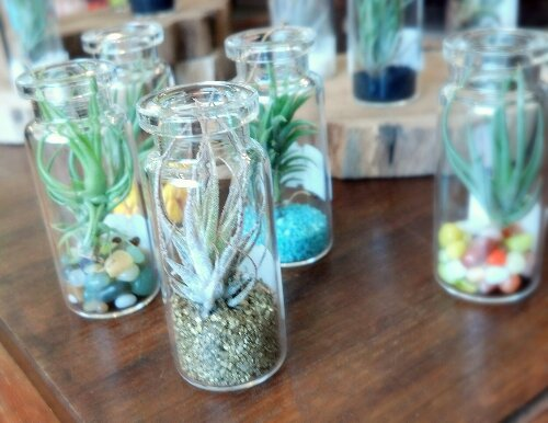 New Mini Terrariums Cactus Jungle