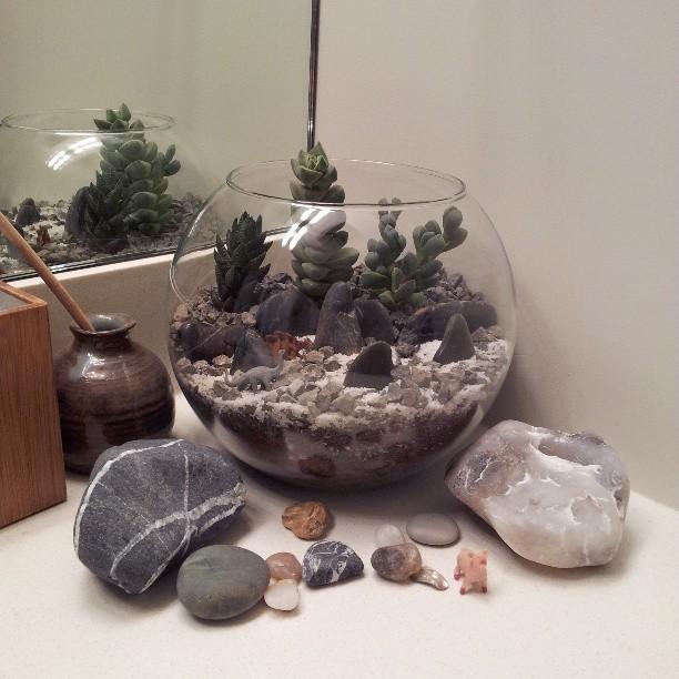 Succulent Terrarium Cactus Jungle