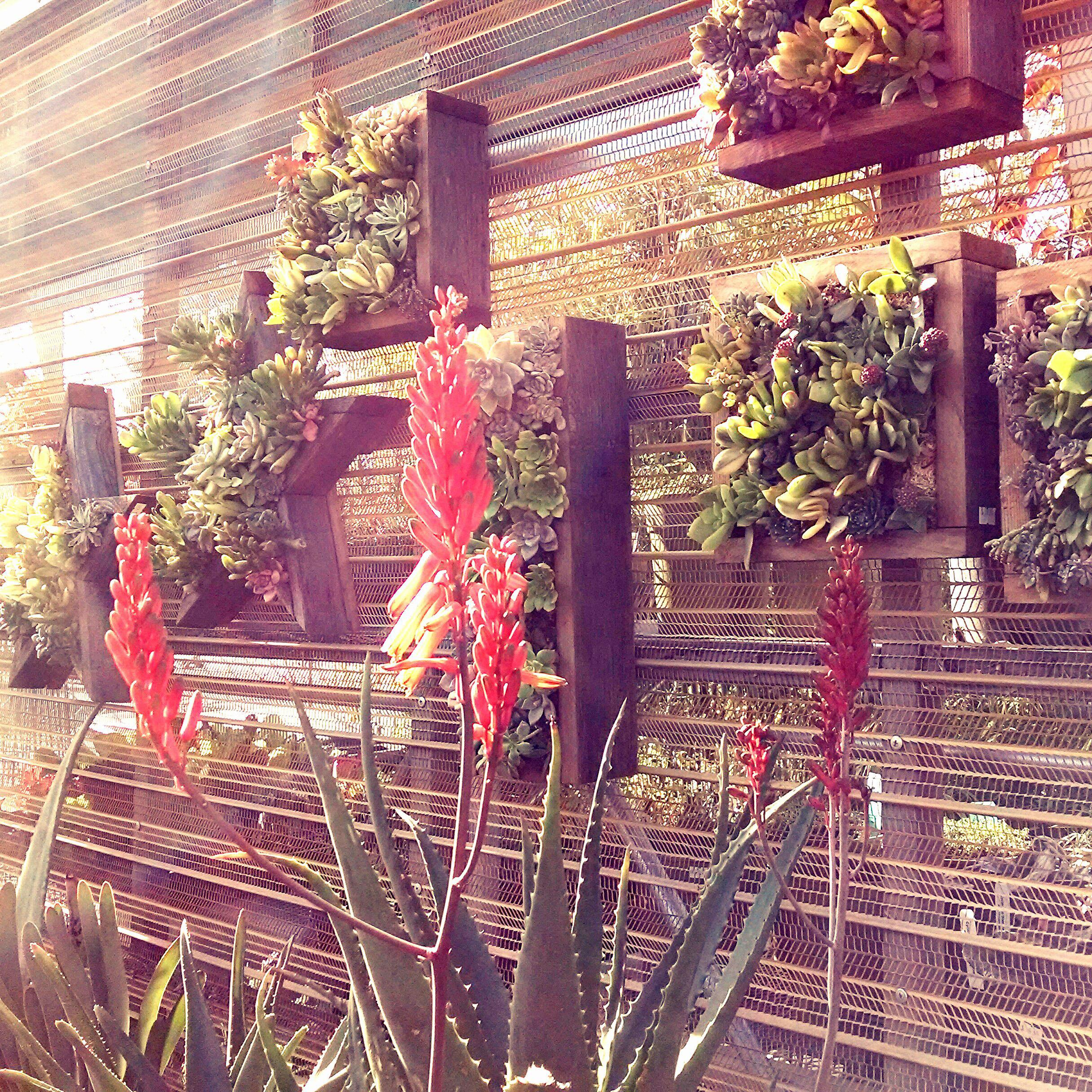 Succulent Wall Panels