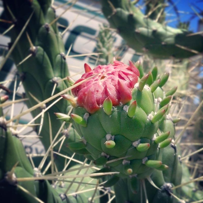 how to make a cactus farm with fences