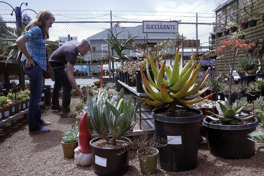 Laura Wehrley Left Looks For Succulents At Cactus Jungle Nursery In Berkeley California With Istant Manager Jeremiah Harper Back Showing