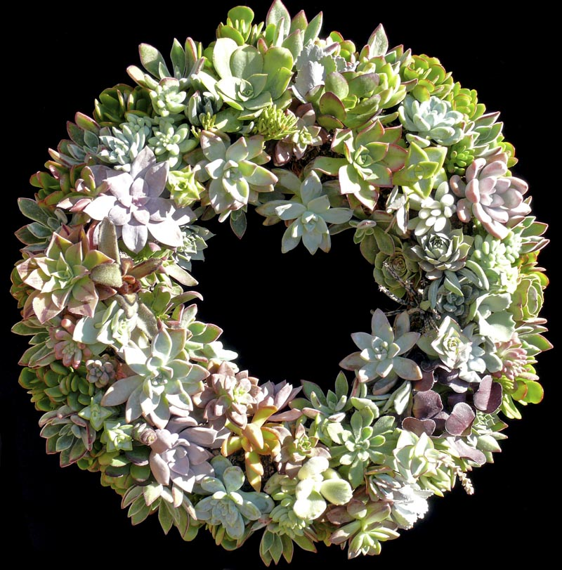 succulent_wreath_2011_large