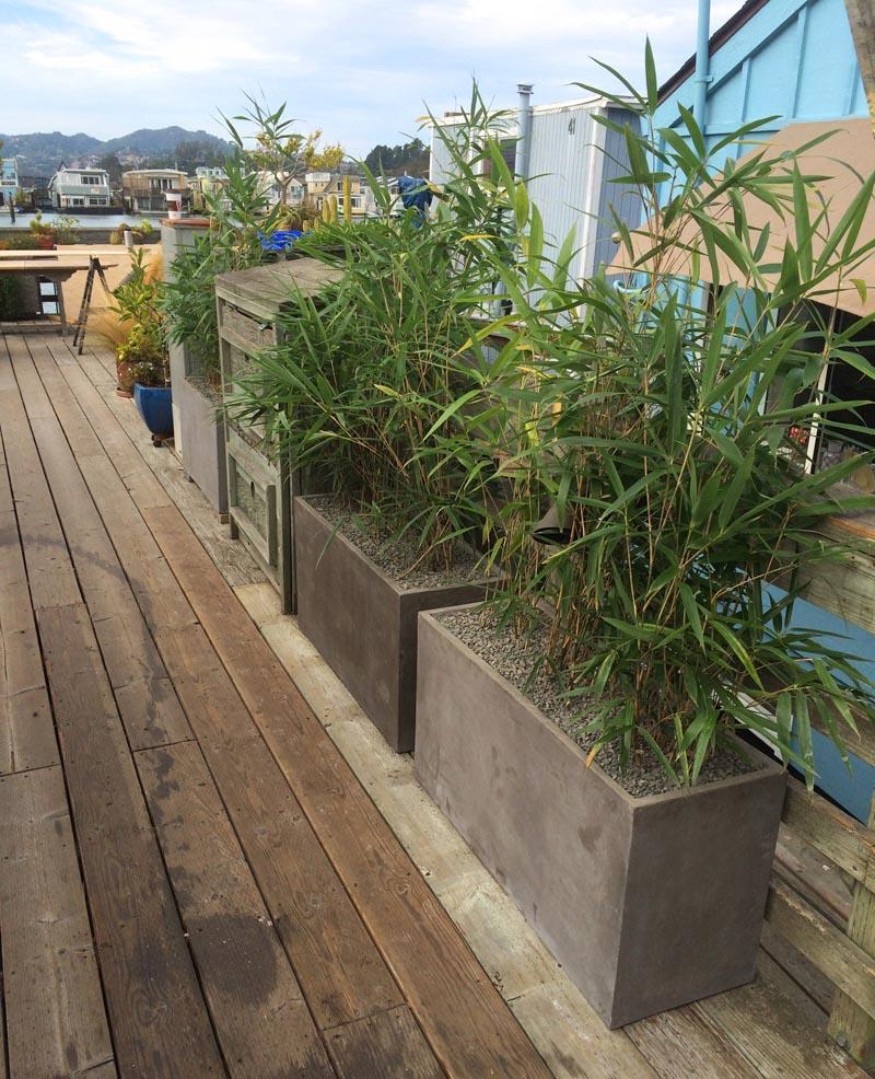 Cavallero_sausalito_bamboo Sausalito Bamboo Container Garden