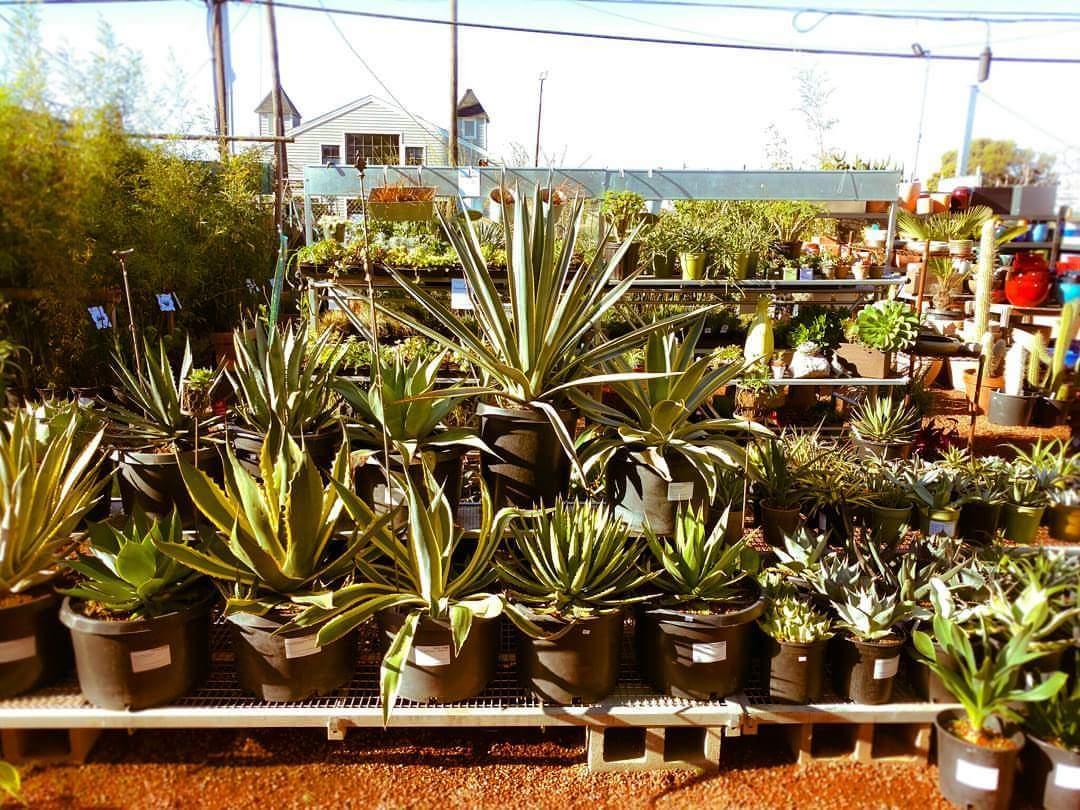 Cactus Jungle Archives - Cactus Jungle