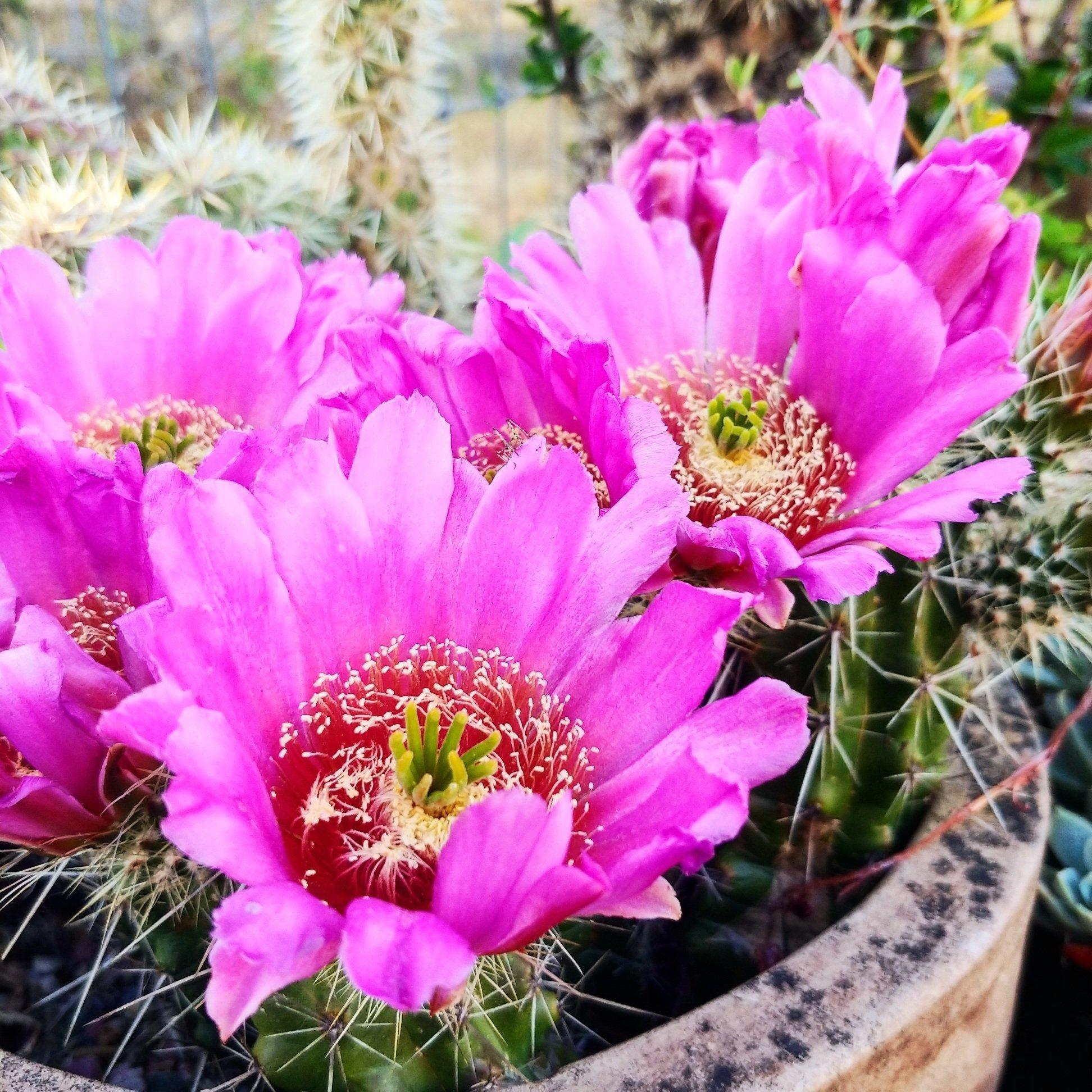 Cactus Blog - Cactus Jungle